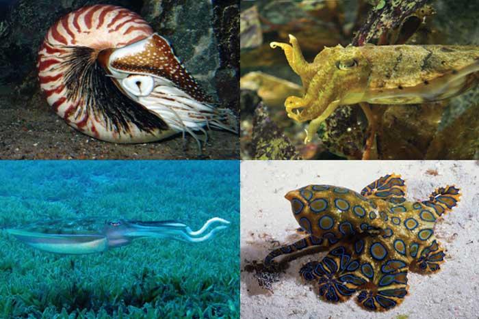 Filum Molluska