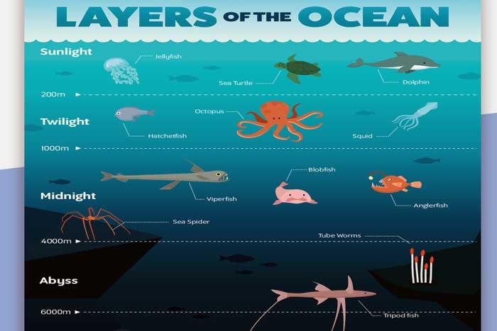 Zona Pembagian Lapisan Laut